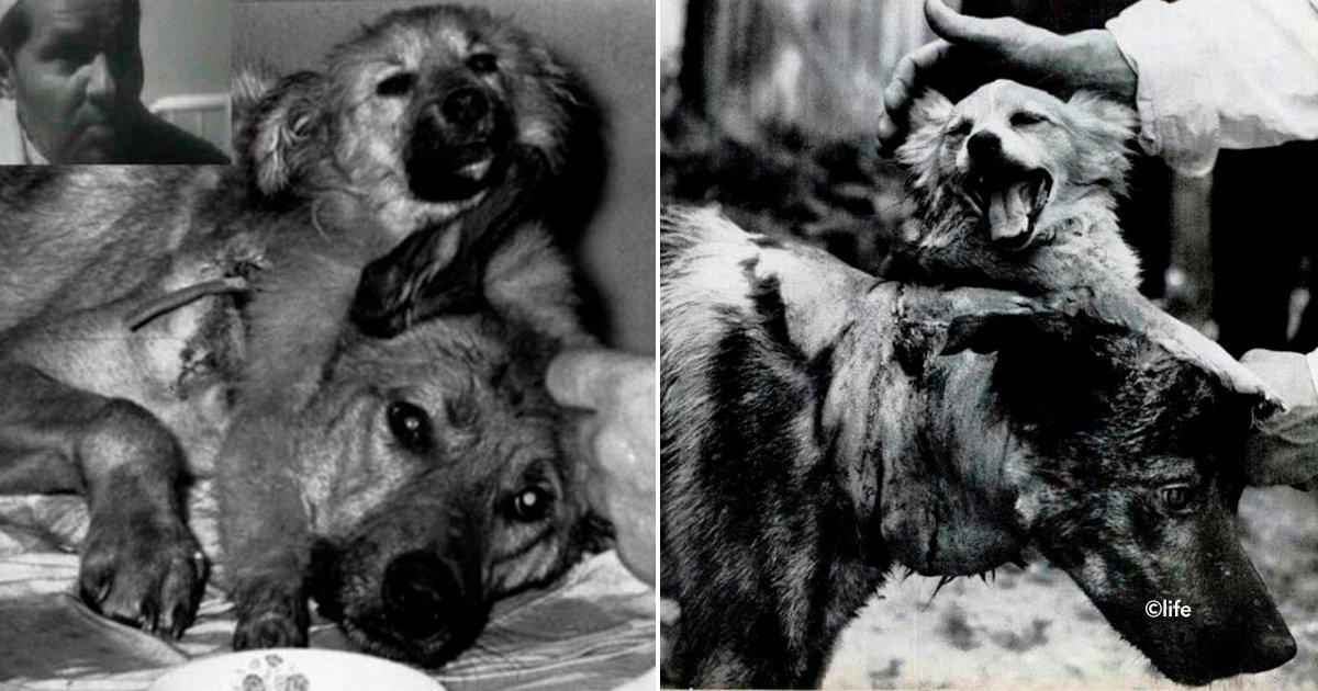 cover22perro 1.jpg?resize=300,169 - El experimento ruso que ha estremecido a miles de personas: los perros de dos cabezas