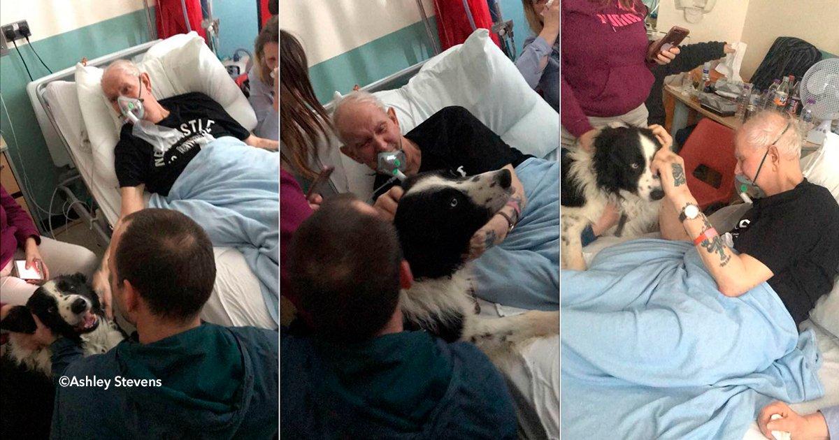 cover22perrovi.jpg?resize=648,365 - El último deseo de este paciente en etapa terminal: despedirse de su adorado perro (video)