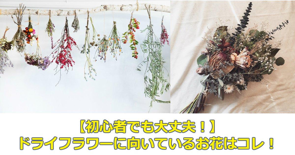 dd - 【初心者でも大丈夫!】ドライフラワーに向いているお花はコレ!