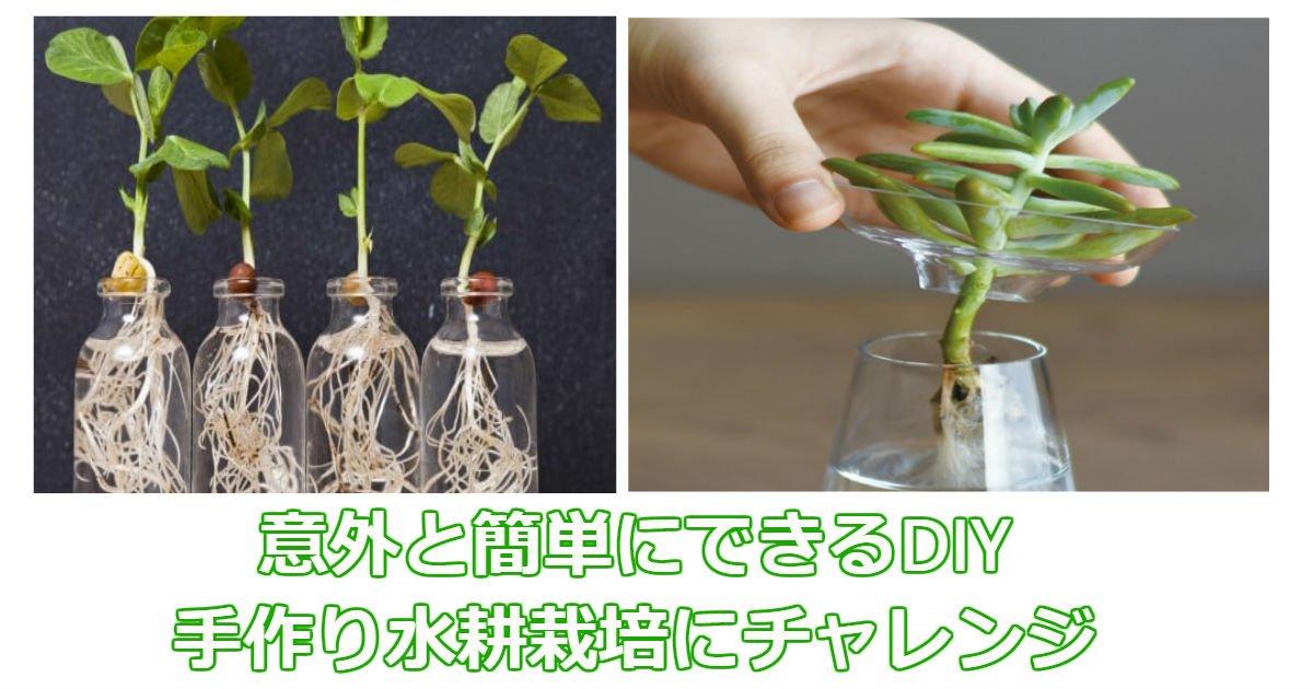 diy - 誰でも今すぐできる!簡単手作り水耕栽培を試してみませんか?