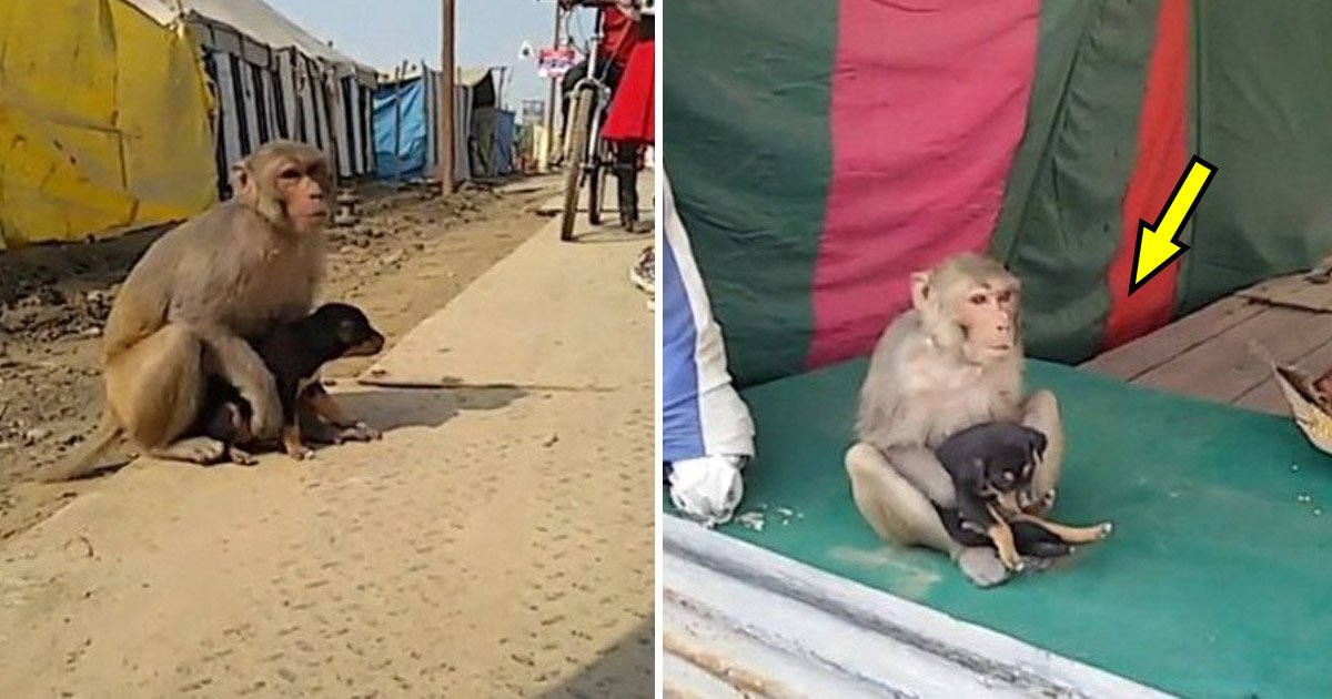 dog 7.jpg?resize=300,169 - Bystanders Film Abandoned Street Animal—But Then, a Monkey Swoops In and Does The Unthinkable