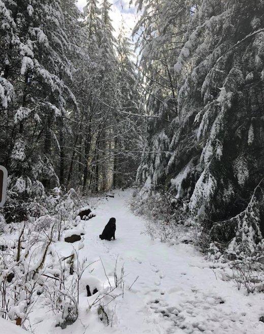 dog-accompanies-couple-on-hike-1