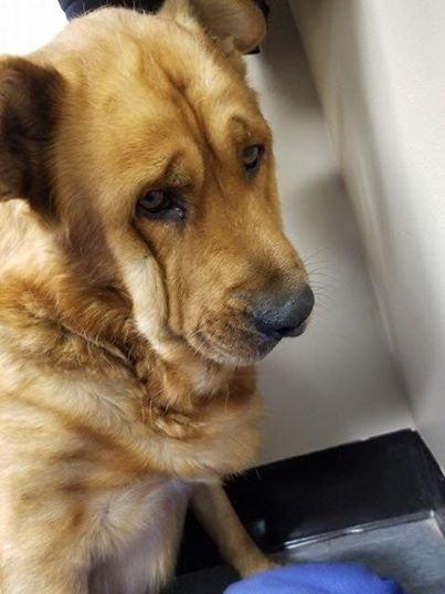 cão-snubs-todos-depois-proprietário-dies-1
