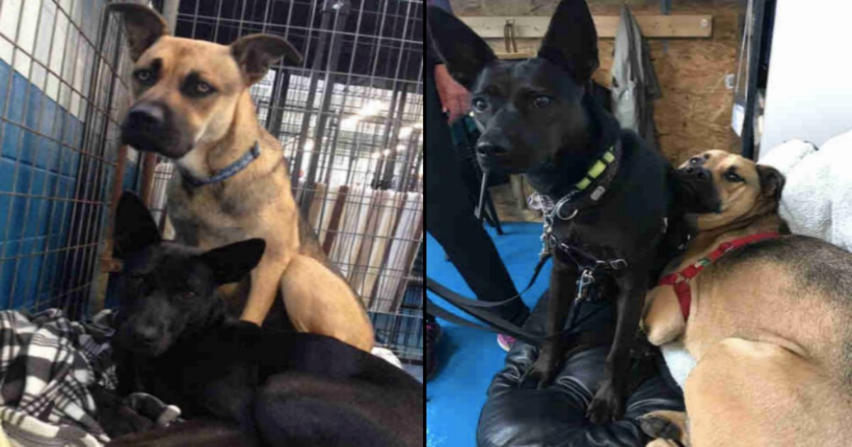 dog tn - The Following 9 Images Show Why The Loving Family Dogs Could Not Be Separated For Adoption