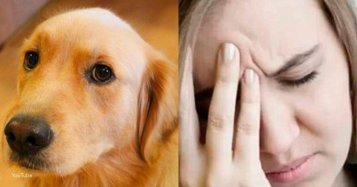 dog - 5 sentimientos que tu perro puede percibir en ti