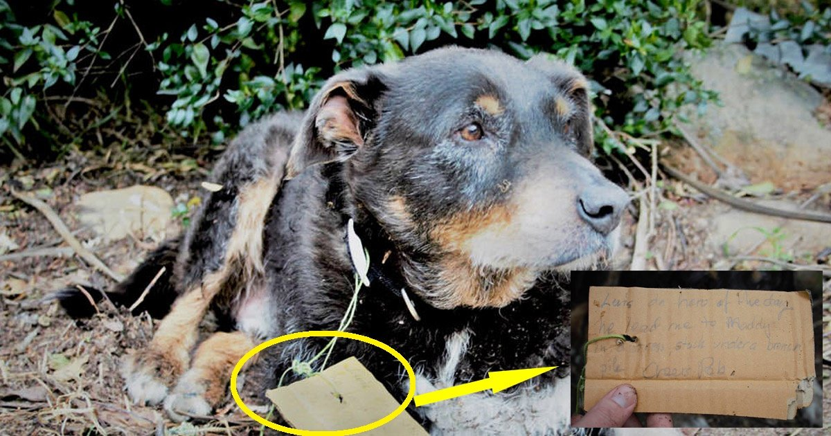dogfriend.jpg?resize=300,169 - This Story Of A 12 Years Old Dog Saved His Friend Will Make Your Day