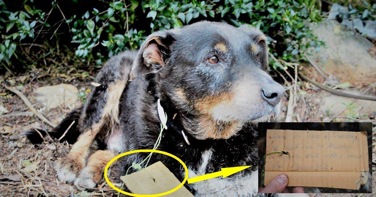 dogfriend.jpg?resize=412,232 - Cette histoire d'un chien âgé de 12 ans qui a sauvé son meilleur ami égayera votre journée