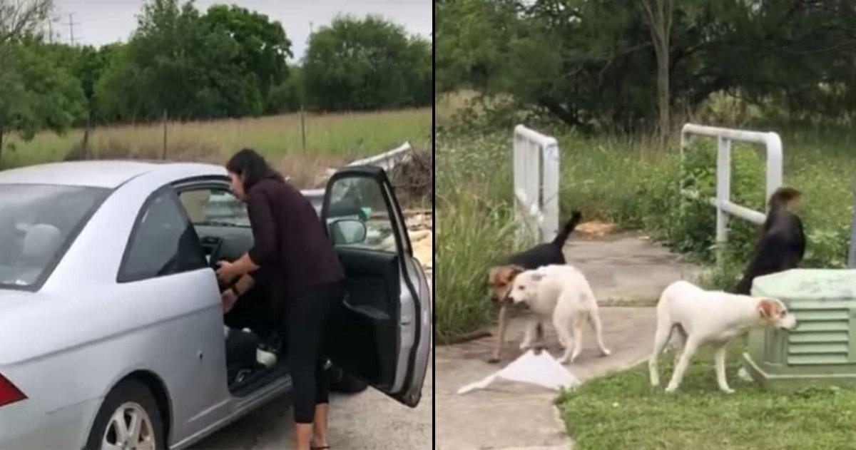 doggies tn 4.jpg?resize=648,365 - Mulher é pega é flagrada por câmera enquanto despeja seus quatro cachorros e recebe o que merece