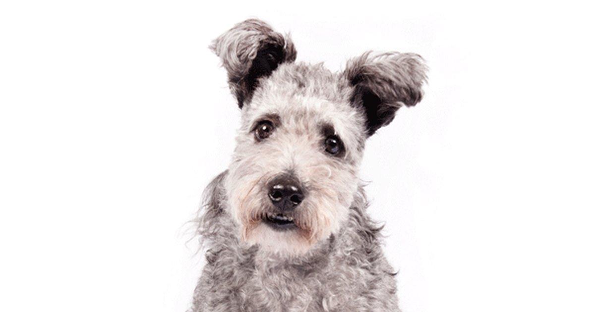 """dogo2 - Cientista afirma que """"cachorros são pessoas"""""""