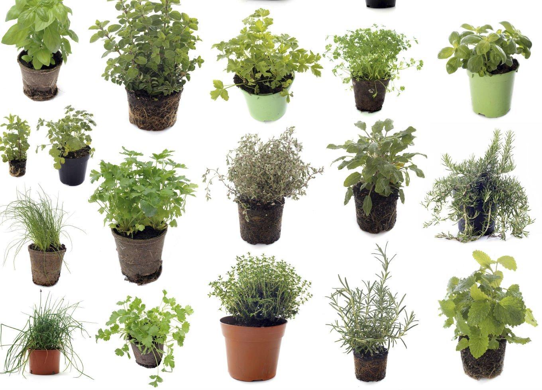 Resultado de imagem para ervas medicinais