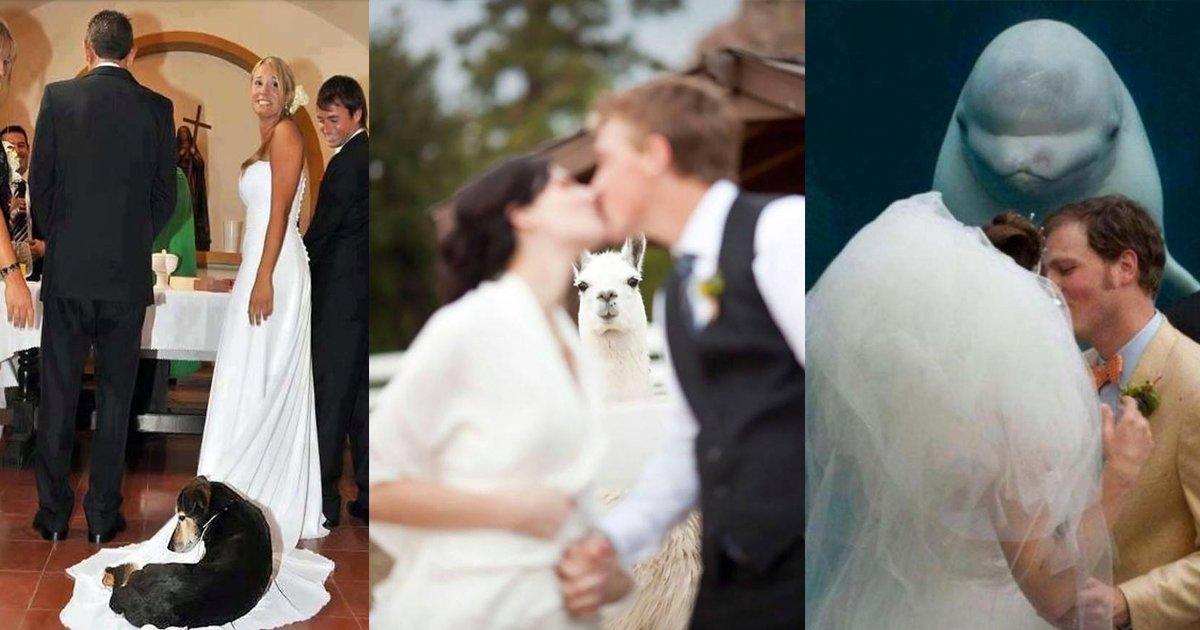e69caae591bde5908d 1 22.png?resize=300,169 - 網友分享18個「史上最可愛的婚禮亂入」這要生氣也很難啊~