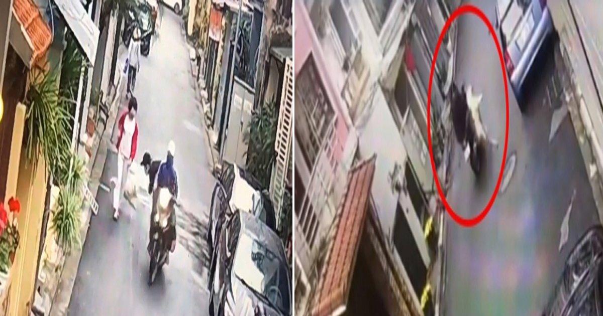 eab09ceb8f84eb9191.jpg?resize=648,365 - 해외 누리꾼들 '분노' 폭발하게 만든 기상천외 베트남 '개 도둑'(영상)