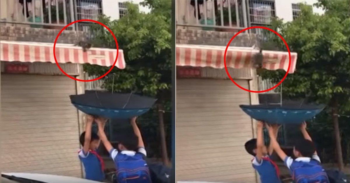 eab3a0ec9691ec9db4.jpg?resize=1200,630 - 위기에 빠진 '아기 고양이' 우산으로 구한 귀여운 '초등학생'들 (영상)