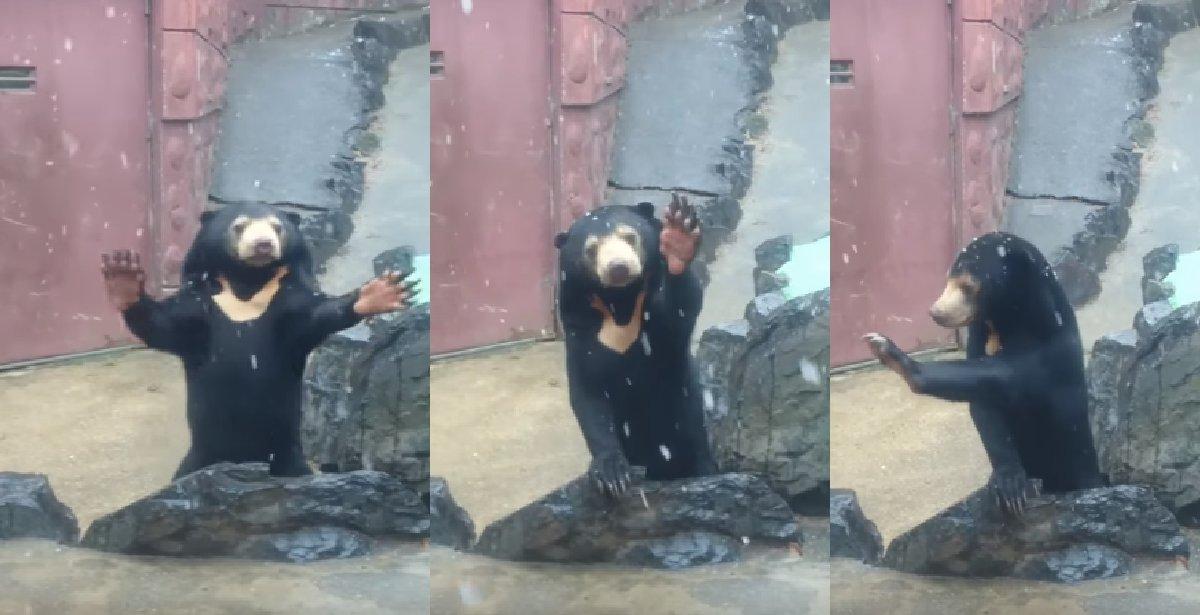 eab3b0 - 아기처럼 좋아하며 눈을 즐기는 곰의 사랑스러운 모습(영상)