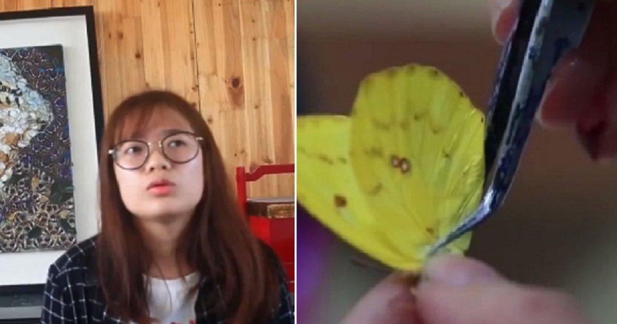"ec8db8eb84ac2.png?resize=412,232 - ""예술인가 학대인가""...졸업작품 위해 살아있는 나비 500마리 날개 뜯은 예술가"