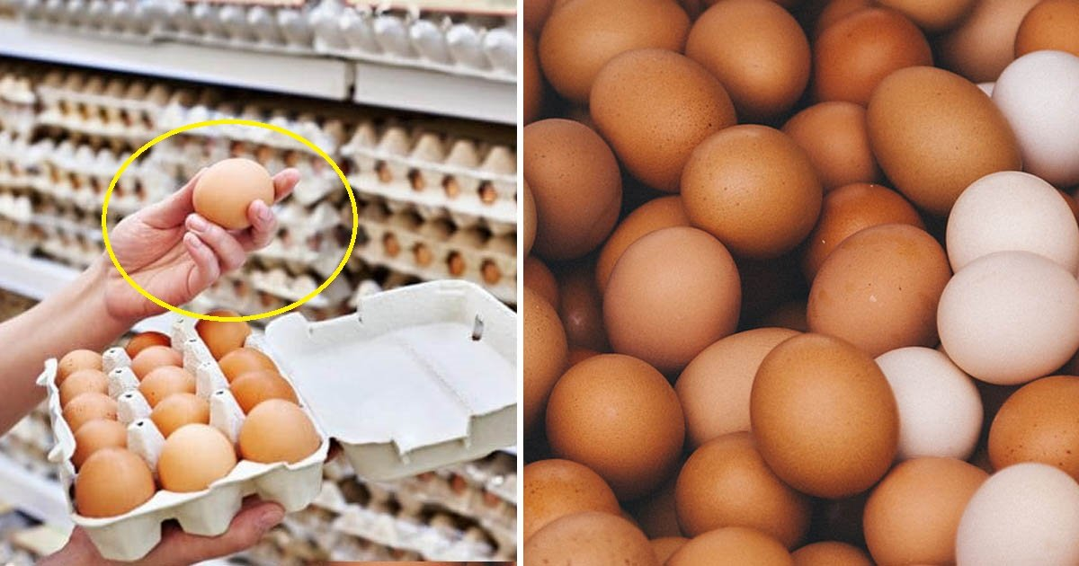 eggs 1.jpg?resize=1200,630 - Salmonella Causes 200 Million Eggs to be Recalled in the US