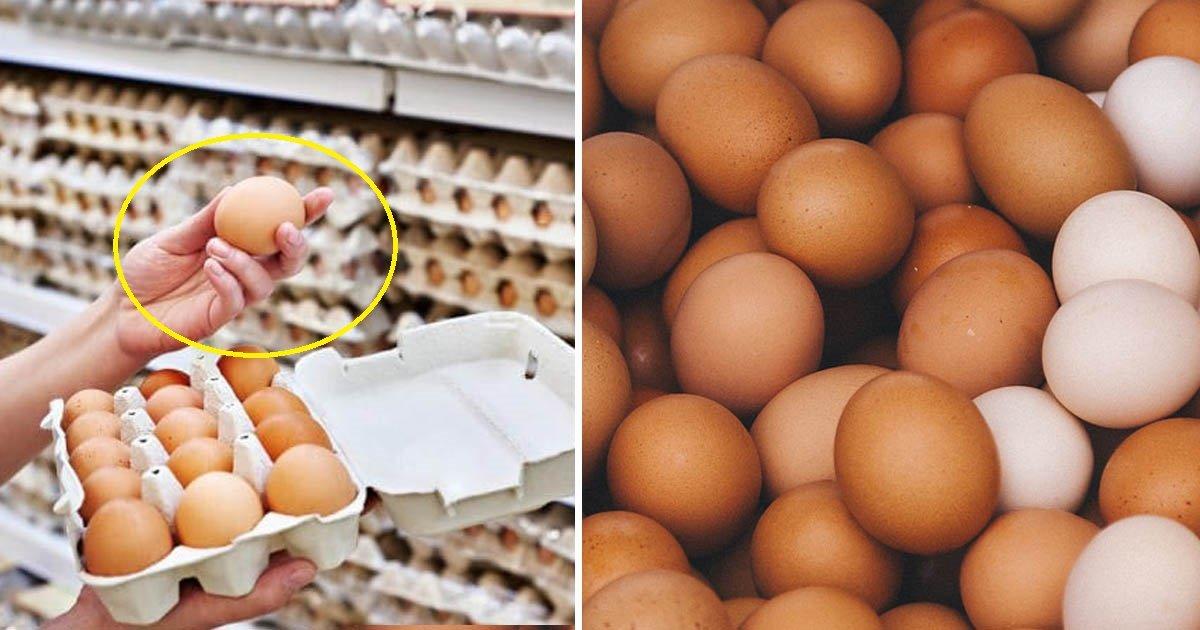 eggs 1 - Une contamination à la salmonelle provoque le rappel de 200 millions d'œufs aux États-Unis