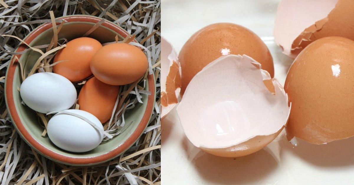 eggshells - Depois de ver isso você nunca mais vai jogar suas cascas de ovos fora