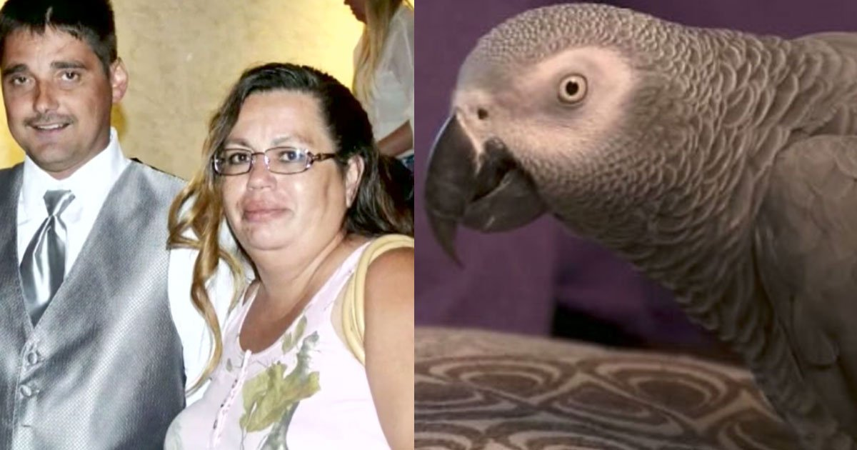 featured 3 - African Grey Parrot Witnessed The Murderer Of A Man Shot At Home
