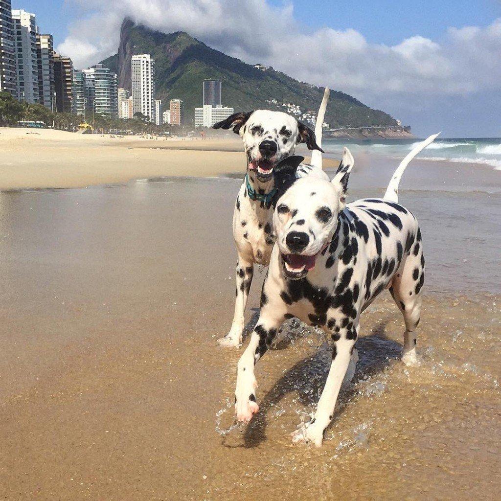 Resultado de imagem para cachorro de praia!