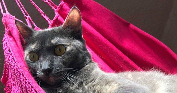 gatorede3.jpg?resize=1200,630 - Este gato ganhou uma rede para relaxar com os donos