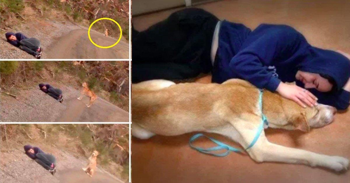 homeless dog.jpg?resize=412,232 - La réaction de ce chien abandonné face une femme couchée immobile vous mettra les larmes aux yeux