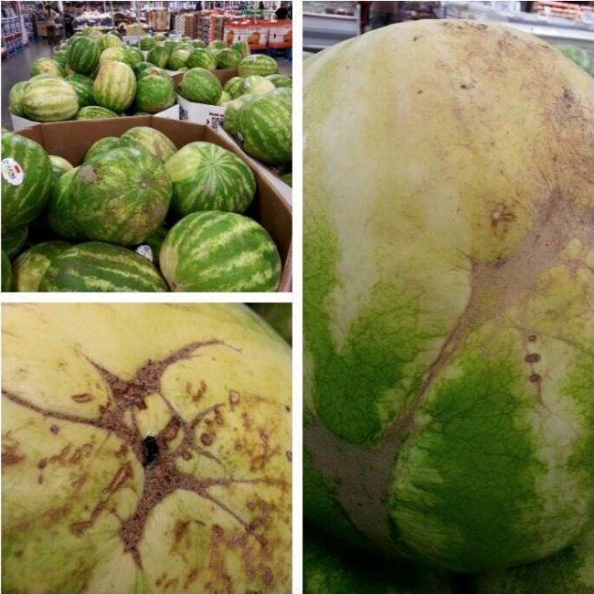 how-to-spot-a-perfect-watermelon-2