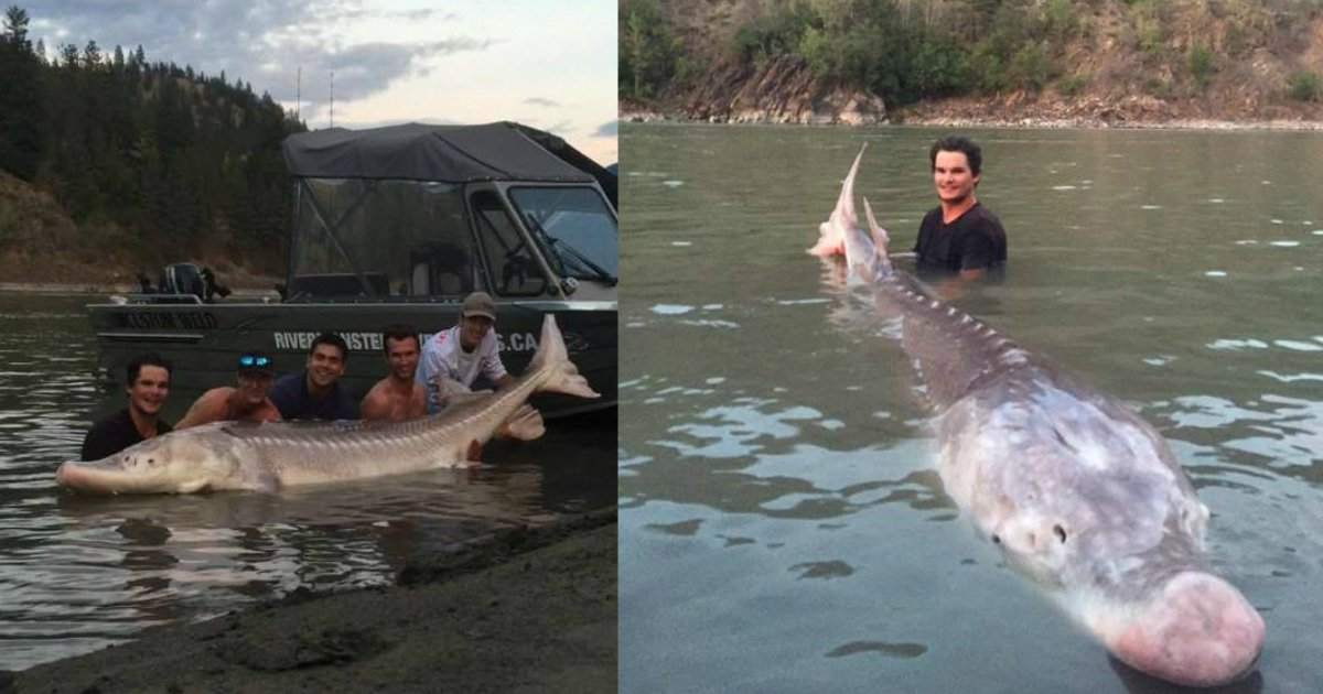 huge fish.jpg?resize=412,232 - Teen Fisherman Named A Local Hero After Catching 10ft 650lb Dinosaur-Like Fish