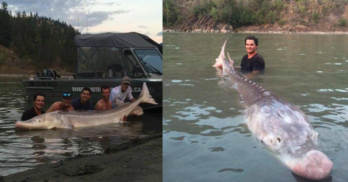 huge fish.jpg?resize=648,365 - Un adolescente atrapó a un pescado de tipo dinosaurio de 3 metros y 300 kilos y es nombrado héroe local