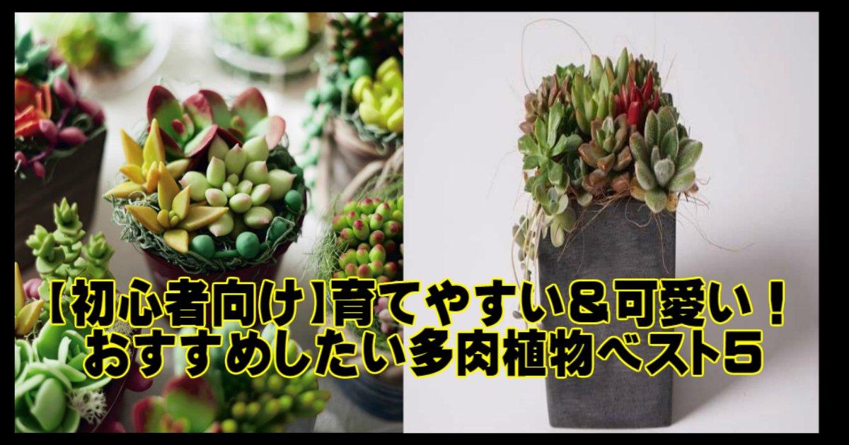 k 15.jpg?resize=1200,630 - 【初心者向け】育てやすい&可愛い!おすすめしたい多肉植物ベスト5