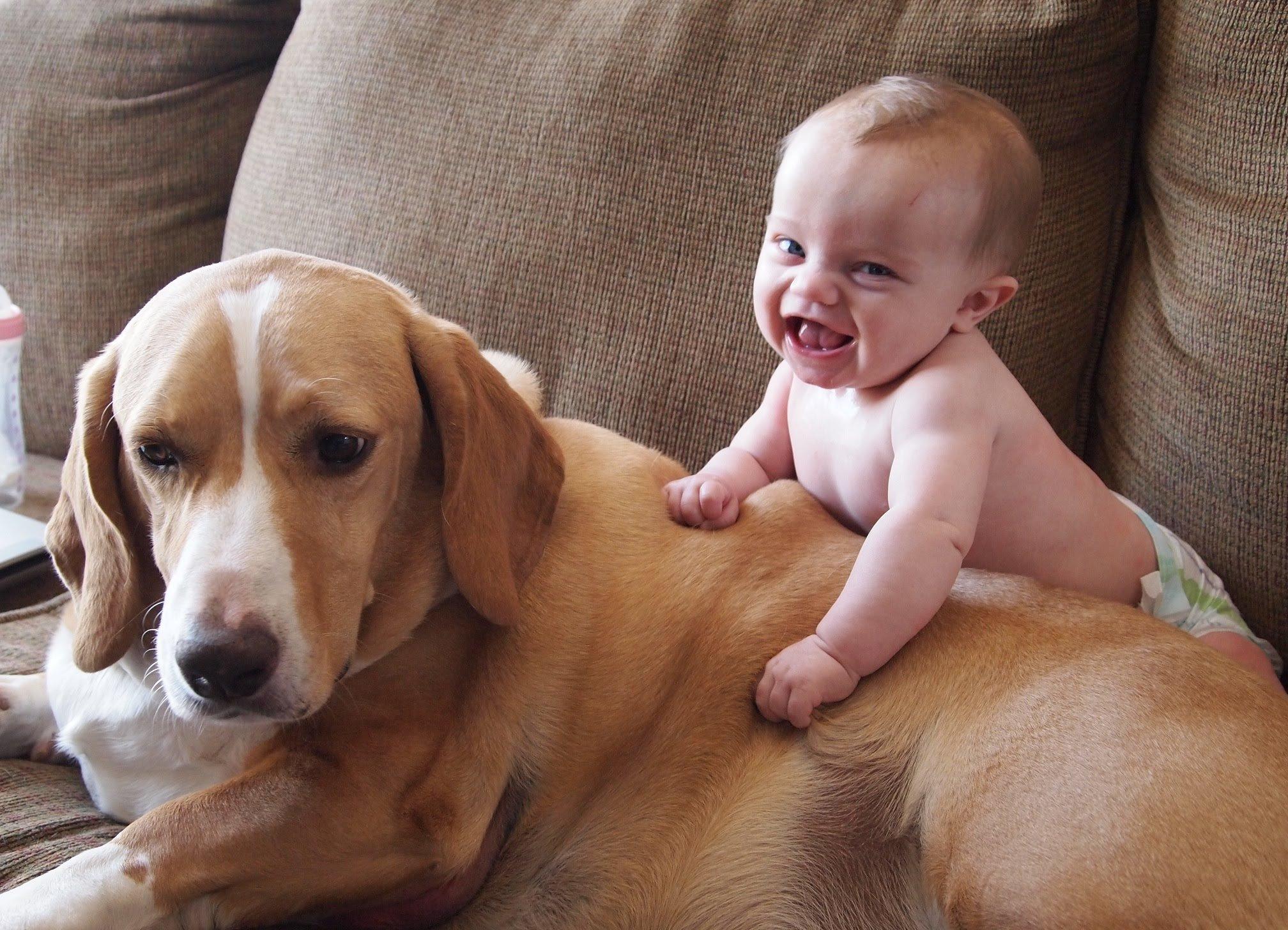 maxresdefault 4 1.jpg?resize=1200,630 - Criar seu bebê com cachorro em casa melhora sua imunidade, é o que diz estudo