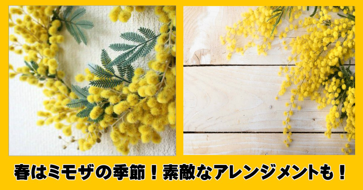 mimo.jpg?resize=1200,630 - 春はミモザの季節です!愛らしいミモザの素敵なアレンジメントもご紹介。