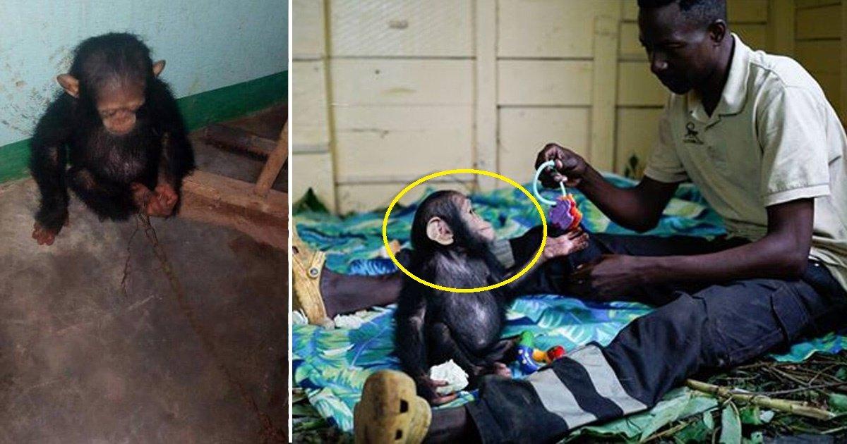 monkey.jpg?resize=300,169 - Traumatized Baby Chimpanzee Wont Let Anyone Come Near Him But One Day Something Strange Happened