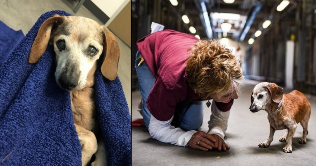 oldog side - This Dog Was Old, Blind, And Abandoned In A Shelter But Found New Hope Through A Lucky Encounter