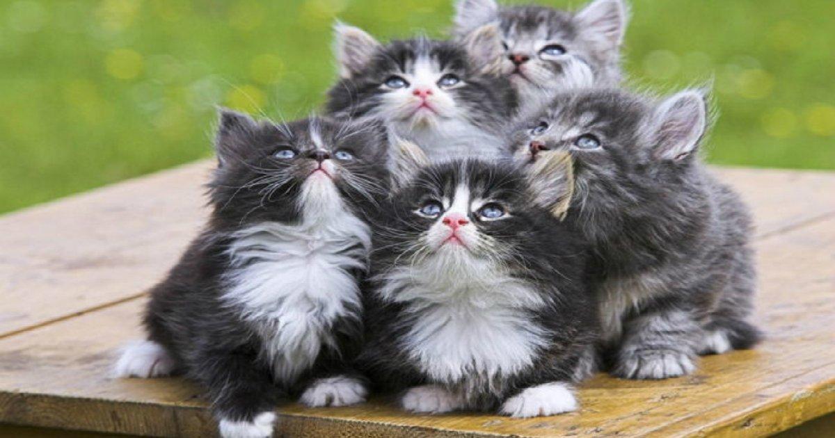 p12wehq6ak3r61u81t4e.jpg?resize=1200,630 - 알다가도 모르겠다! 품종 별로 다른 '고양이'들의 '진짜' 성격 7