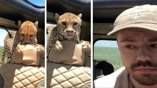 qwereqwewq 1.jpg?resize=1200,630 - 何か食べたくて車に乱入した「野生チーター」に向き合う男性(映像)