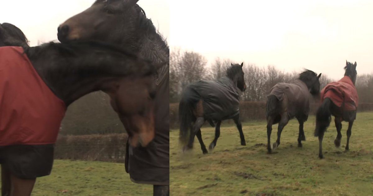 returning home.jpg?resize=1200,630 - [Vidéo] Ce cheval revient chez lui après 4 ans d'absence. Mais ses anciens camarades de jeu ne l'ont pas oublié.