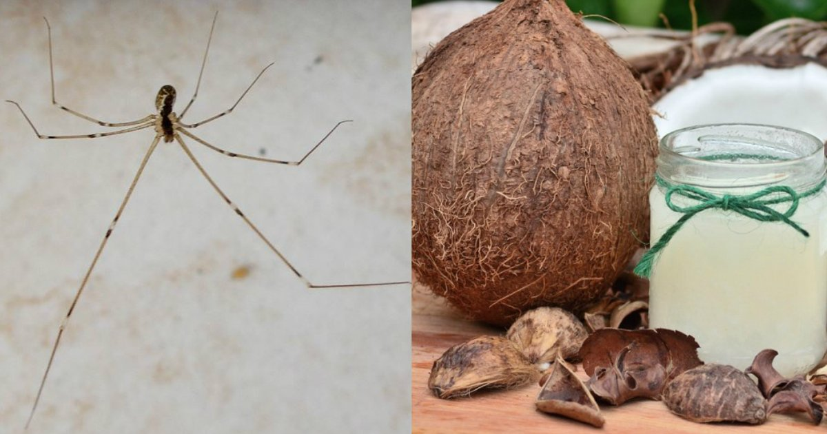 rid of spiders - 10 Simple Ways To Get Rid Of Spiders For Good Without Using Chemicals