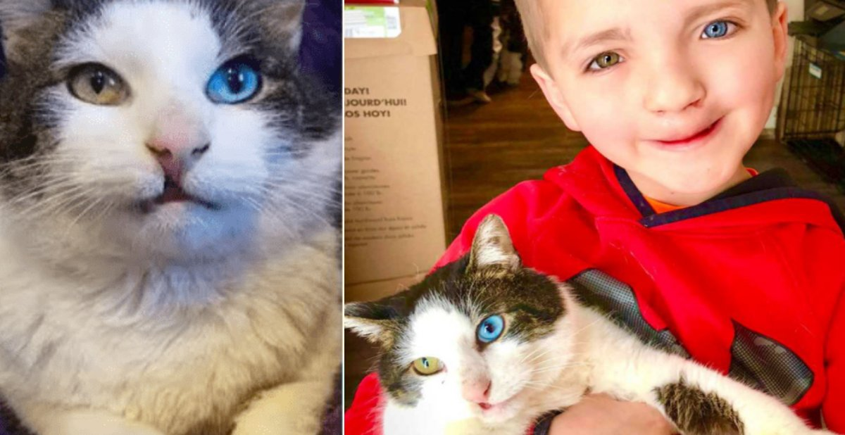 sample copy copy copy 1.png?resize=300,169 - Bullied 7-Year-Old Boy Finds His Spirit Animal, A Cat With Same Eye Condition And Cleft Lip