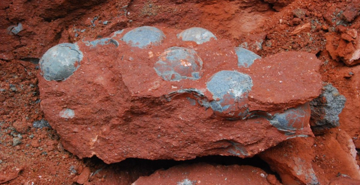 sample copy copy copy 10 - Construction Workers Accidentally Discover 43 Dinosaur Eggs In The Chinese Province Of Guangdong