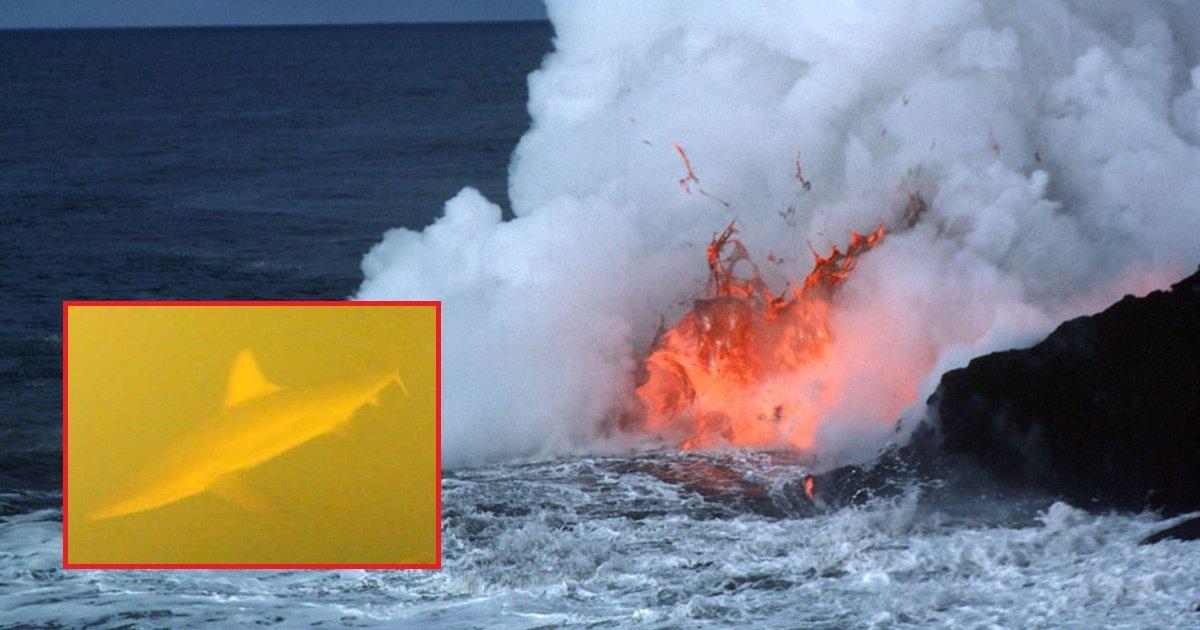 shark.jpg?resize=300,169 - Scientists Discovered Living Sharks Inside an Active Underwater Volcano