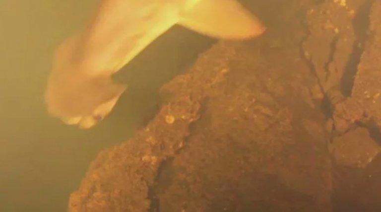 sharks-live-inside-underwater-volcano-2