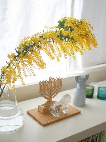 茎の長いミモザをカットせず、そのまま大胆に生けた例。まるで花のトンネルのよう。お気に入りの雑貨と並べて楽しんで。