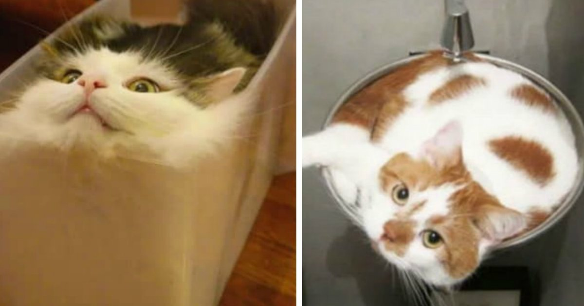 thumb2 - 어느 그릇에나 쏙 들어가는 고양이 '액체설' 사실로 드러났다 (사진)