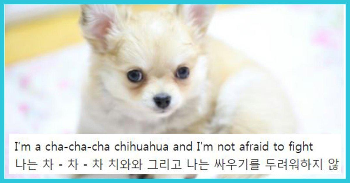unni thumbnail 3 - 소형견중에 성격 장난 아니라는 강아지 TOP3