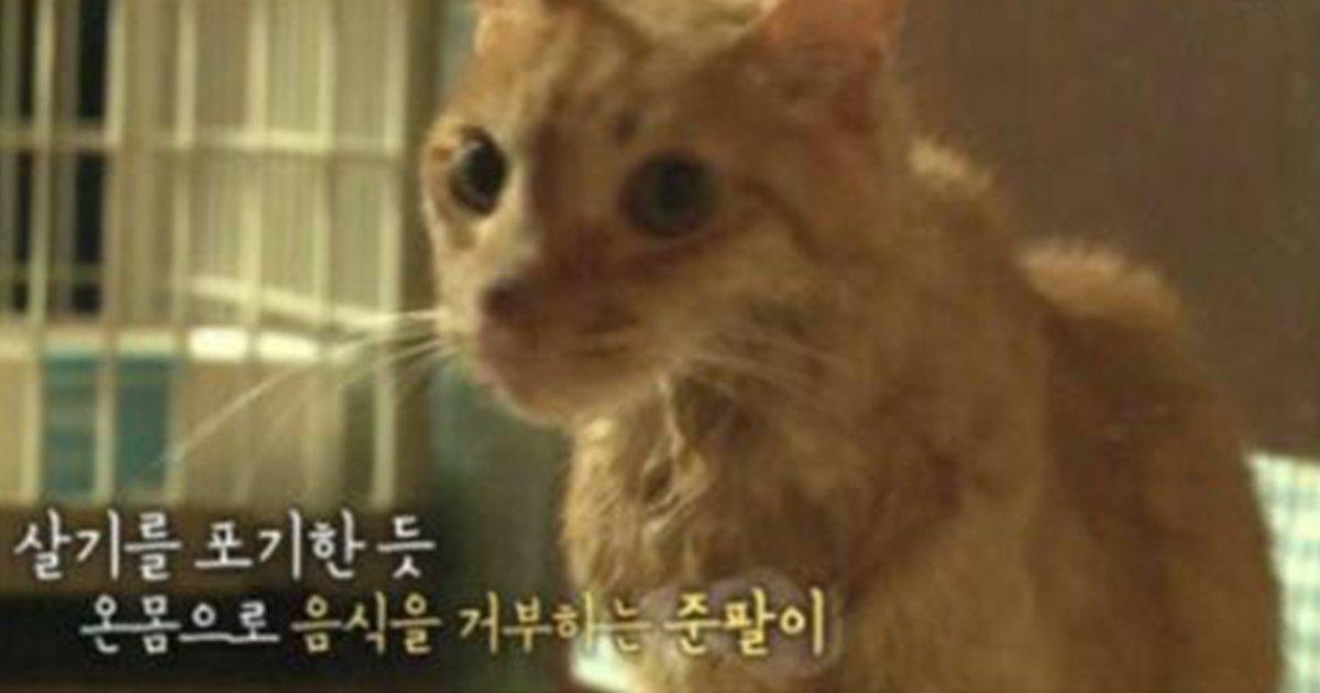 unni thumbnail 8.jpg?resize=1200,630 - 뮤지컬 배우 배다해 유기묘 확대 사건