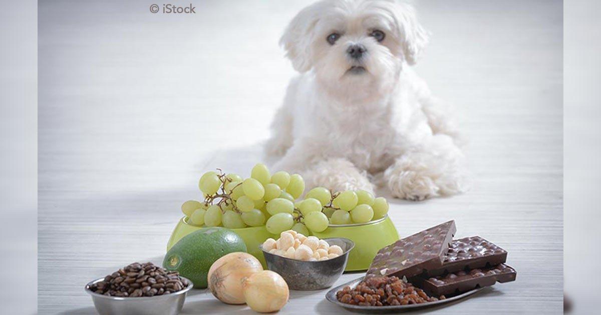 untitled 1 103 - 8 cosas que tu perro jamás debe comer