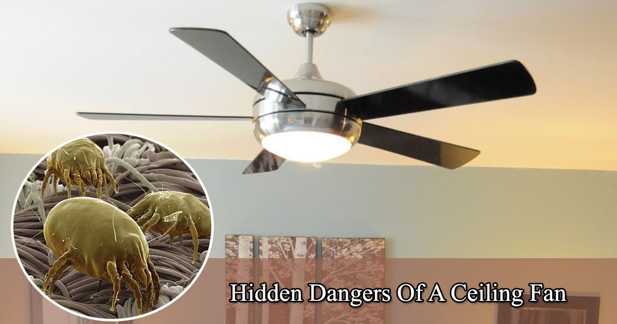 Hidden dangers of a ceiling fan things you need to know about your hidden dangers of a ceiling fan things you need to know about your ceiling fan aloadofball Choice Image