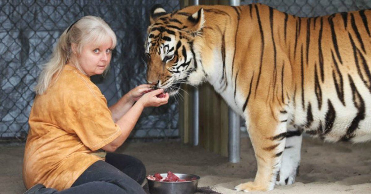 untitled 1 5 - This Florida Woman Doesn't Think Twice About Keeping Tigers As Pets At Home