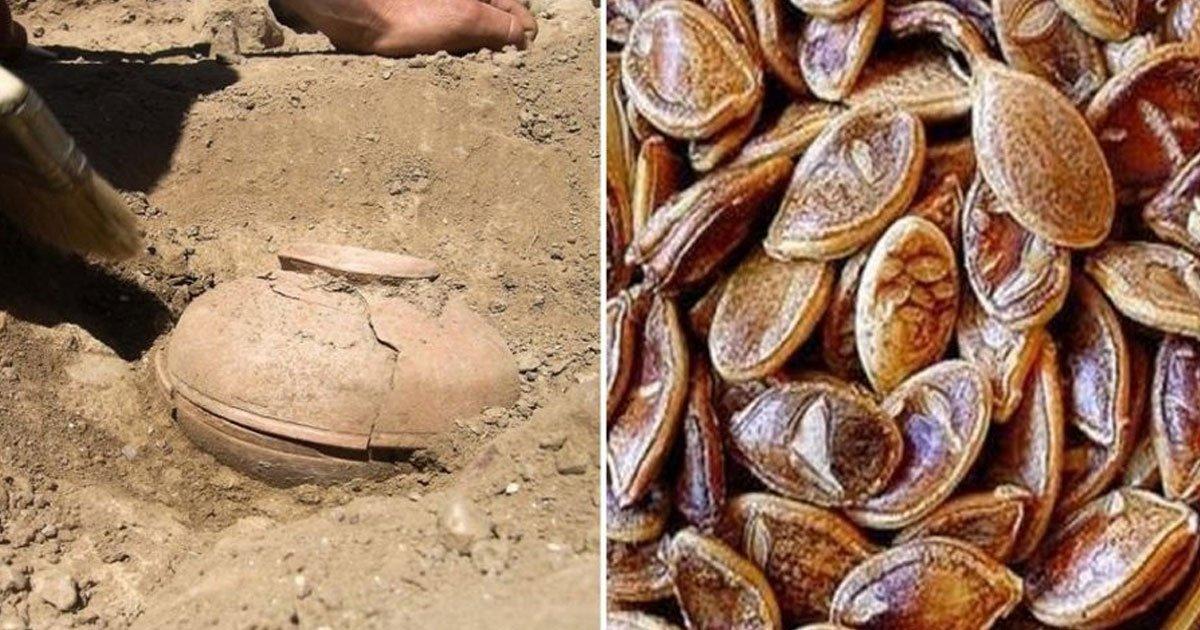 untitled 1 55 - Encontraron semillas de más de 800 años, las cultivan y el resultado es asombroso
